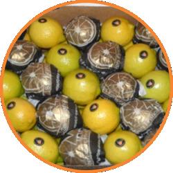 limon-coosa