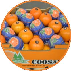 mandarina-coosanfra